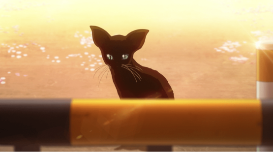 Your Lie In April black cat