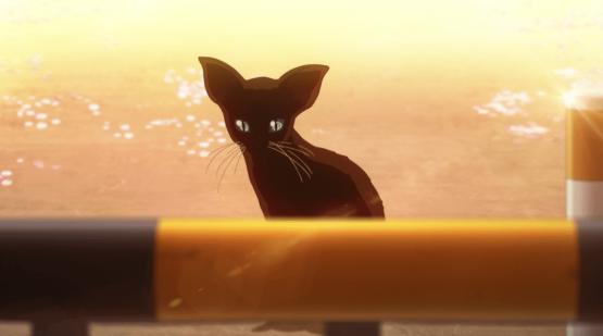 Your Lie In April black cat